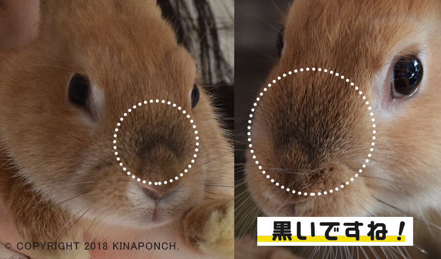 kinaponch!きなこブログ20180312_02