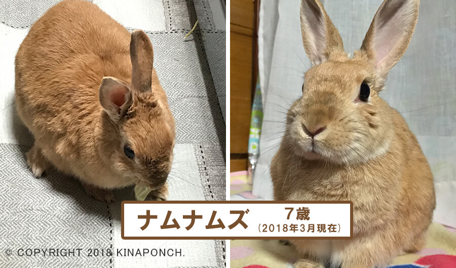 kinaponch!きなこブログ_20180317_02