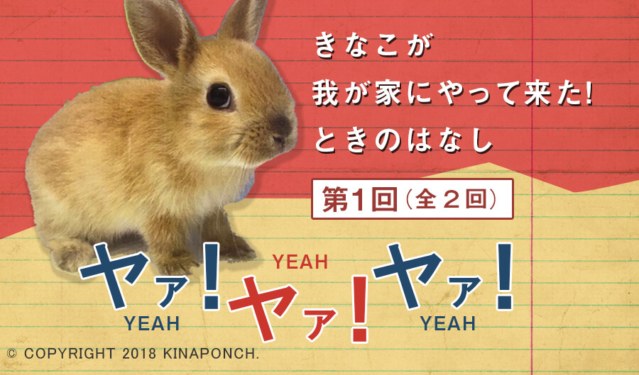 kinaponch!きなこブログ20180317_TOP